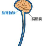 脳脊髄液と脳硬膜